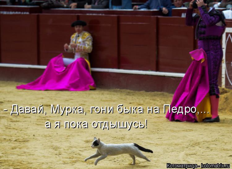 Котоматрица: - Давай, Мурка, гони быка на Педро,... а я пока отдышусь!