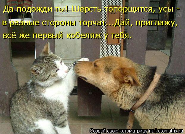 Котоматрица: Да подожди ты! Шерсть топорщится, усы - в разные стороны торчат...Дай, приглажу,  всё же первый кобеляж у тебя.