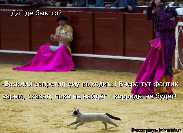 Котоматрица: -Да где бык-то? -Василий запретил ему выходить! Вчера тут фантик  зарыл, сказал, пока не найдёт - корриды не будет!