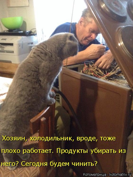 Котоматрица: Хозяин, холодильник, вроде, тоже плохо работает. Продукты убирать из него? Сегодня будем чинить?