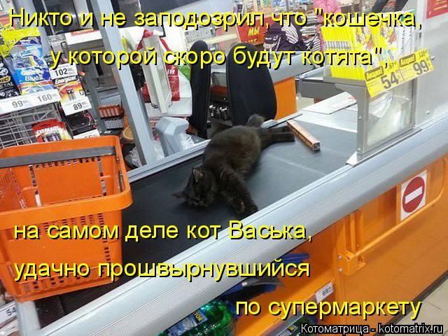 """Котоматрица: Никто и не заподозрил,что """"кошечка, у которой скоро будут котята"""", на самом деле кот Васька, удачно прошвырнувшийся по супермаркету"""