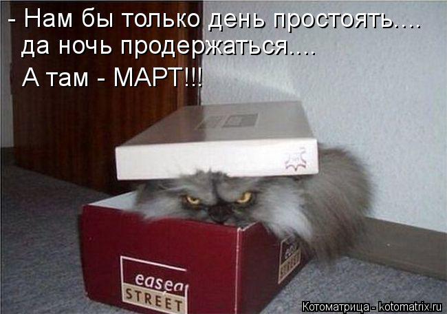 Котоматрица: - Нам бы только день простоять.... да ночь продержаться.... А там - МАРТ!!!