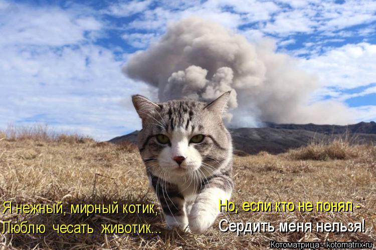 Котоматрица: Я нежный, мирный котик, Люблю  чесать  животик... Сердить меня нельзя! Но, если кто не понял - Но, если кто не понял -