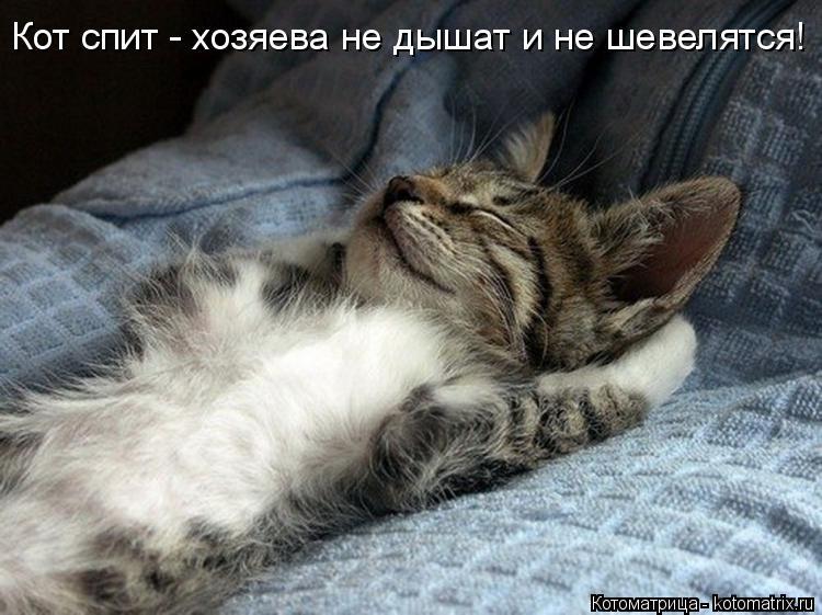 Котоматрица: Кот спит - хозяева не дышат и не шевелятся!