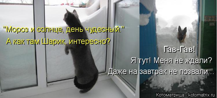"""Котоматрица: """"Мороз и солнце, день чудесный."""" А как там Шарик, интересно? Гав-Гав!  Я тут! Меня не ждали? Даже на завтрак не позвали..."""