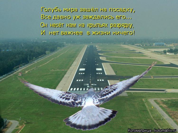 Котоматрица: Голубь мира зашёл на посадку, Все давно уж заждались его... Он  несёт  нам  на  крыльях  разрядку, И  нет важнее  в жизни ничего!