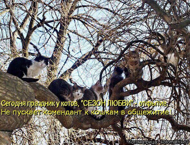 """Котоматрица: Сегодня праздник у котов, """"СЕЗОН ЛЮБВИ"""" - открытие, Не пускает комендант к кошкам в общежитие! Не пускает комендант к кошкам в общежитие! Сего"""
