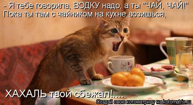 """Котоматрица: - Я тебе говорила, ВОДКУ надо, а ты """"ЧАЙ, ЧАЙ!"""" ХАХАЛЬ твой сбежал!....  Пока ты там с чайником на кухне возишься,"""