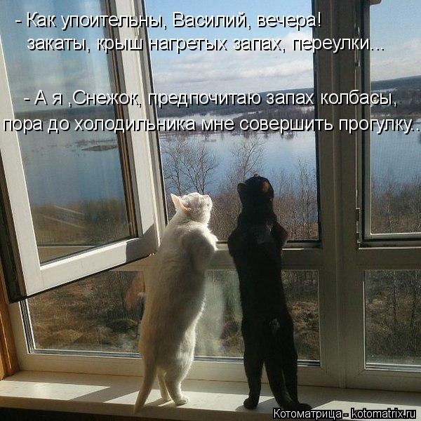 Котоматрица: - Как упоительны, Василий, вечера! закаты, крыш нагретых запах, переулки... - А я ,Снежок, предпочитаю запах колбасы, пора до холодильника мне с?