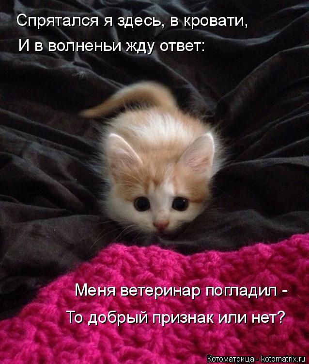 Котоматрица: Спрятался я здесь, в кровати, И в волненьи жду ответ: Меня ветеринар погладил - То добрый признак или нет?