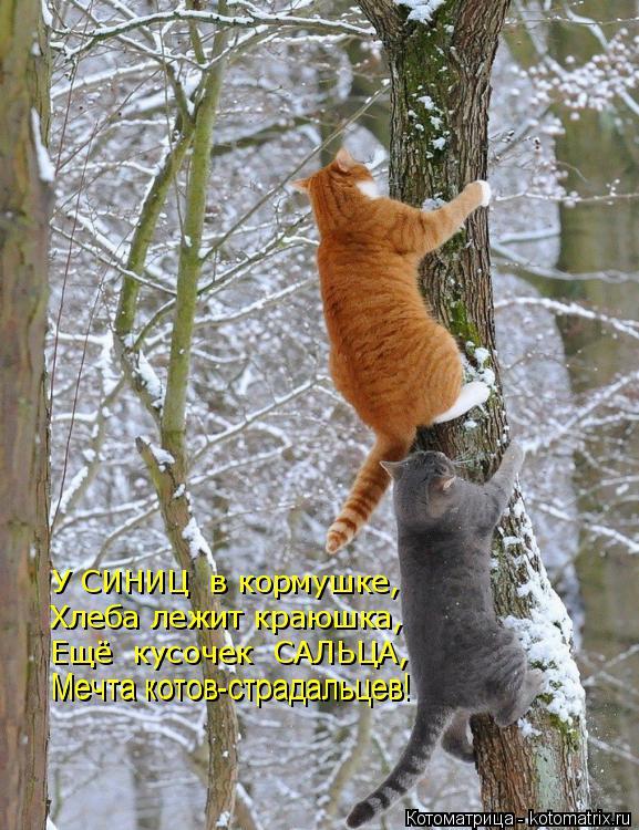 Котоматрица: У СИНИЦ  в кормушке,  Хлеба лежит краюшка, Ещё  кусочек  САЛЬЦА, Мечта котов-страдальцев! Мечта котов-страдальцев!