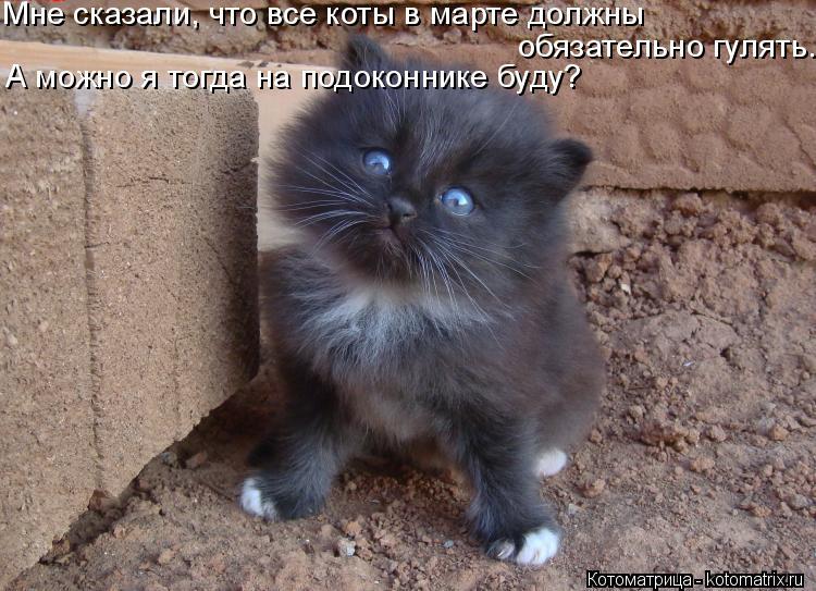 Котоматрица: Мне сказали, что все коты в марте должны   обязательно гулять. А можно я тогда на подоконнике буду?