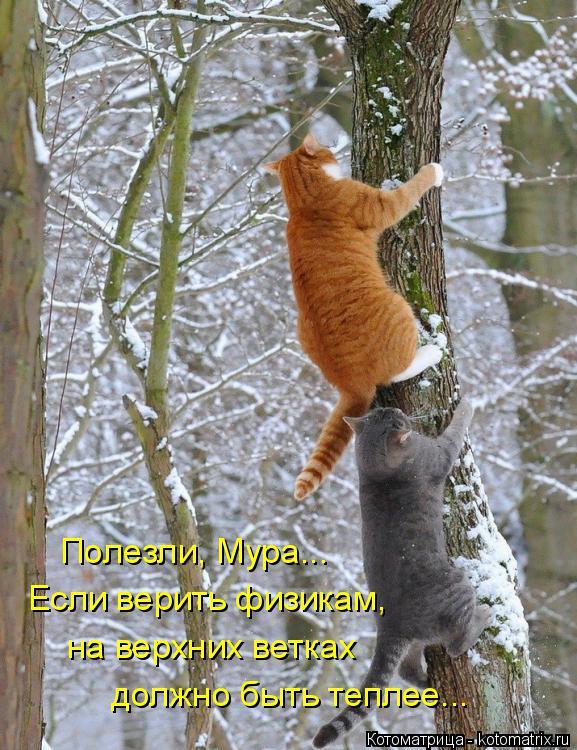Котоматрица: Полезли, Мура... Если верить физикам, на верхних ветках  должно быть теплее...