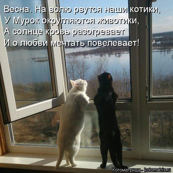 Котоматрица: Весна. На волю рвутся наши котики, У Мурок округляются животики, А солнце кровь разогревает И о любви мечтать повелевает!