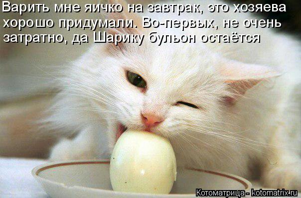Котоматрица: Варить мне яичко на завтрак, это хозяева хорошо придумали. Во-первых, не очень  затратно, да Шарику бульон остаётся
