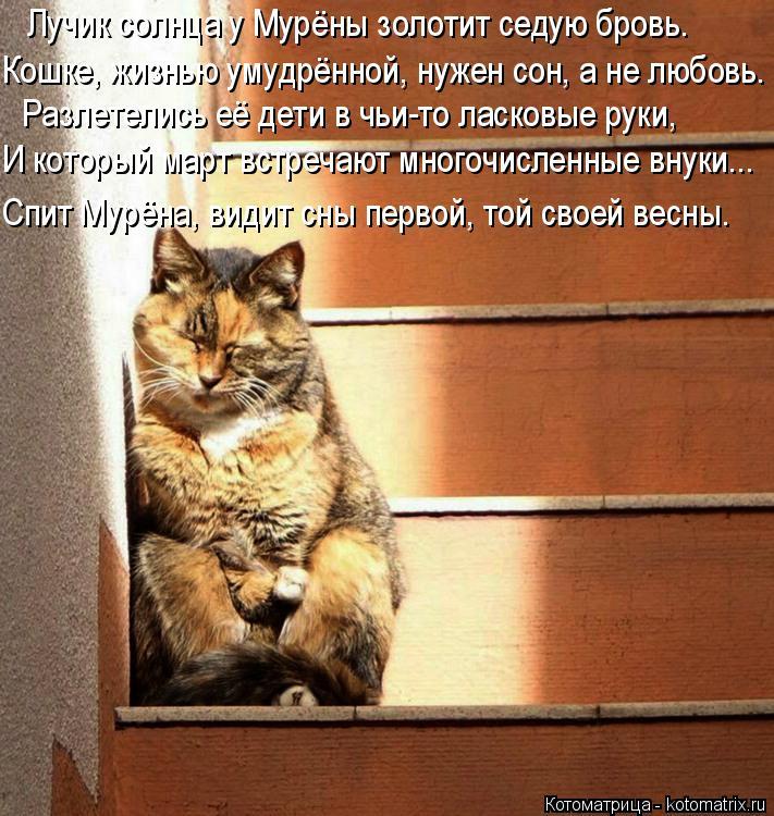 Котоматрица: Лучик солнца у Мурёны золотит седую бровь.  Кошке, жизнью умудрённой, нужен сон, а не любовь.  Разлетелись её дети в чьи-то ласковые руки,  И ко