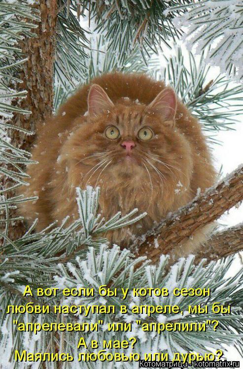 """Котоматрица: А вот если бы у котов сезон  любви наступал в апреле, мы бы """"апрелевали"""" или """"апрелили""""? А в мае?  Маялись любовью или дурью?"""