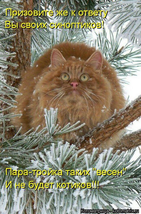 """Котоматрица: Призовите же к ответу  Вы своих синоптиков! Пара-тройка таких """"весен"""" И не будет котиков!!!"""
