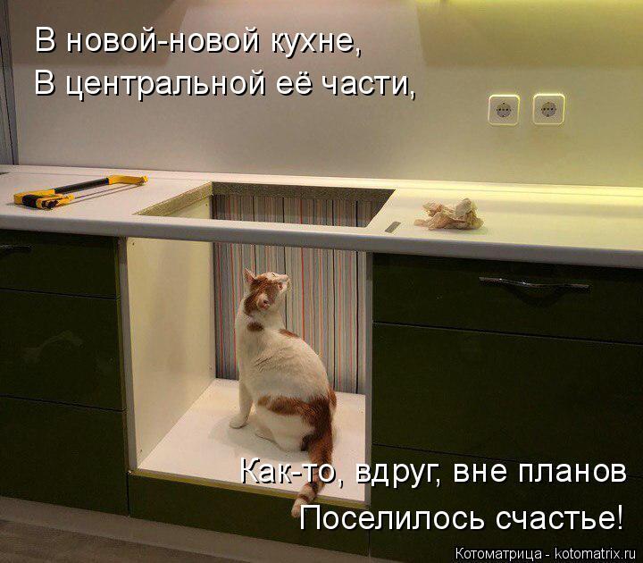Котоматрица: В новой-новой кухне, В центральной её части, Как-то, вдруг, вне планов Поселилось счастье!