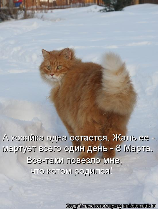 Котоматрица: А хозяйка одна остается. Жаль ее - мартует всего один день - 8 Марта. Все-таки повезло мне,  что котом родился!