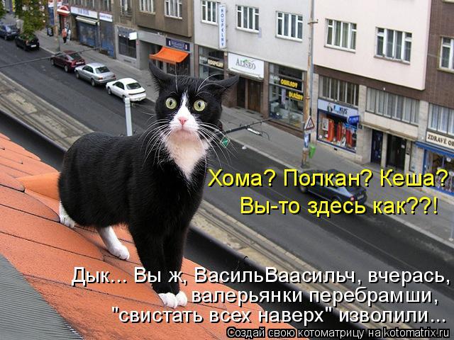 """Котоматрица: """"свистать всех наверх"""" изволили... валерьянки перебрамши, Дык... Вы ж, ВасильВаасильч, вчерась, Хома? Полкан? Кеша?  Вы-то здесь как??!"""