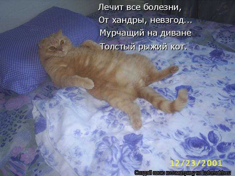Котоматрица: Лечит все болезни,  От хандры, невзгод... Мурчащий на диване Толстый рыжий кот.