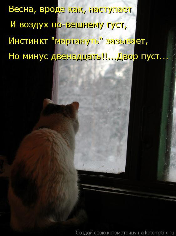 """Котоматрица: Весна, вроде как, наступает Инстинкт """"мартануть"""" зазывает, И воздух по-вешнему густ, Но минус двенадцать!!...Двор пуст..."""