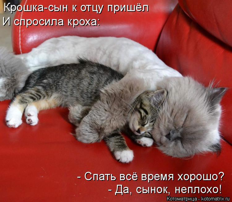 Котоматрица: Крошка-сын к отцу пришёл И спросила кроха: - Спать всё время хорошо? - Да, сынок, неплохо!