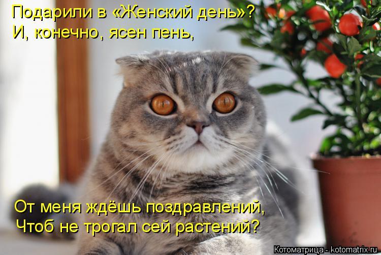 Котоматрица: Подарили в «Женский день»? И, конечно, ясен пень, От меня ждёшь поздравлений, Чтоб не трогал сей растений?