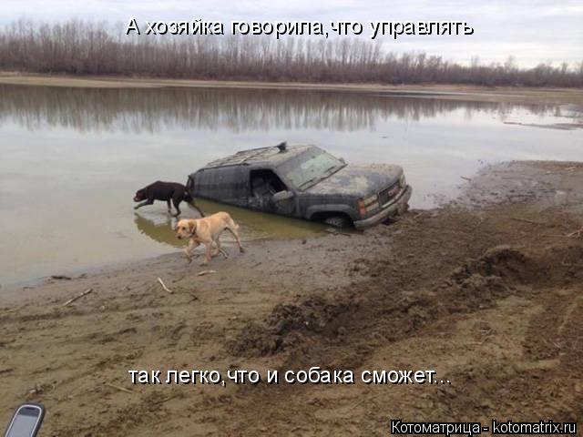 Котоматрица: А хозяйка говорила,что управлять так легко,что и собака сможет...