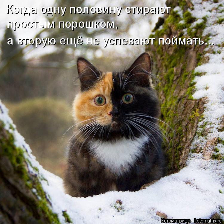 http://kotomatrix.ru/images/lolz/2018/03/07/kotomatritsa_0.jpg