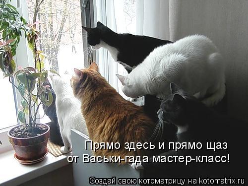 Котоматрица: Прямо здесь и прямо щаз от Васьки-гада мастер-класс!