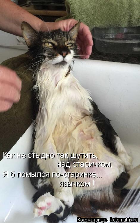 Котоматрица: Как не стыдно так шутить, над старичком, Я б помылся по-старинке... язычком !