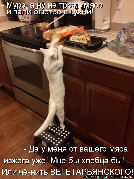 Котоматрица: - Мурз, а ну не трожь мясо  и вали быстро с кухни! Или чё-нить ВЕГЕТАРЬЯНСКОГО!!.... - Да у меня от вашего мяса изжога уже! Мне бы хлебца бы!...