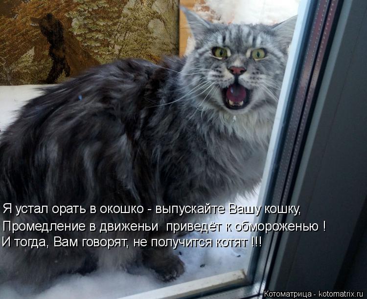 Котоматрица: Я устал орать в окошко - выпускайте Вашу кошку, И тогда, Вам говорят, не получится котят !!! Промедление в движеньи  приведёт к обмороженью !