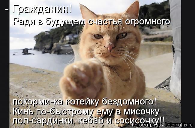 Котоматрица: - Гражданин!  Ради в будущем счастья огромного покорми-ка котейку бездомного! Кинь по-быстрому ему в мисочку  пол-сардинки, кебаб и сосисочку