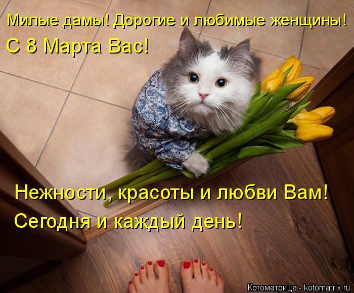 Котоматрица: Милые дамы! Дорогие и любимые женщины! С 8 Марта Вас! Нежности, красоты и любви Вам! Сегодня и каждый день!