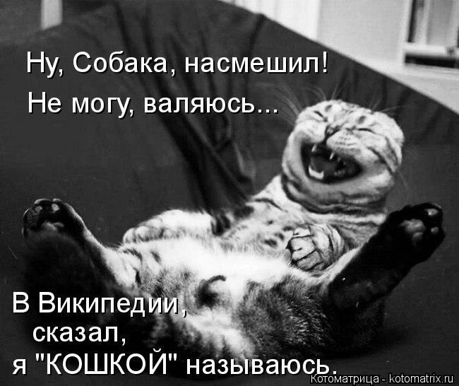 """Котоматрица: Не могу, валяюсь... Ну, Собака, насмешил! я """"КОШКОЙ"""" называюсь. В Википедии,  сказал,"""