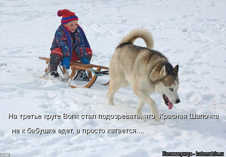 Котоматрица: На третье круге Волк стал подозревать, что  Красная Шапочка не к бабушке едет, а просто катается....