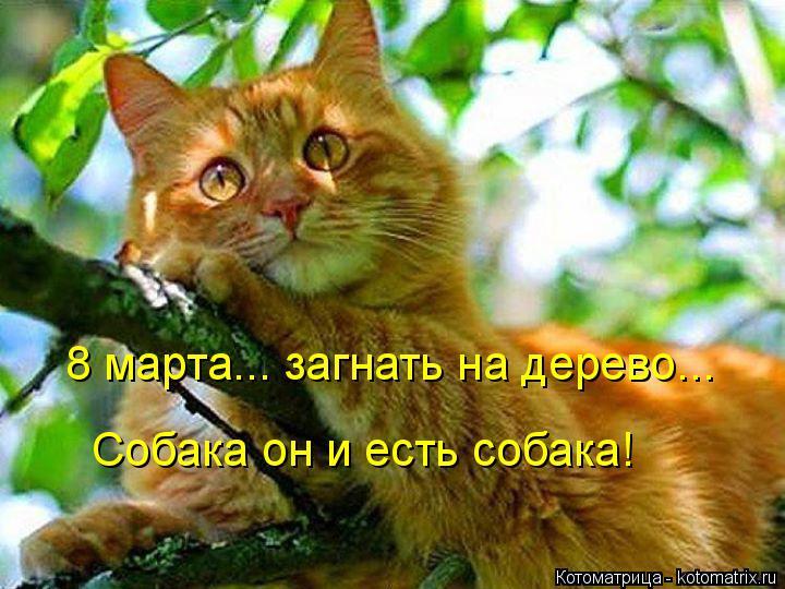 Котоматрица: 8 марта... загнать на дерево... Собака он и есть собака!