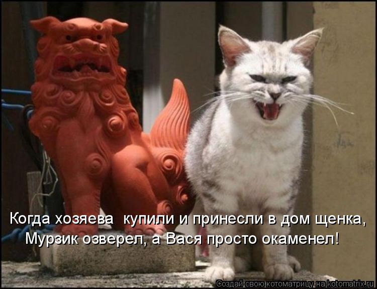 Котоматрица: Когда хозяева  купили и принесли в дом щенка, Мурзик озверел, а Вася просто окаменел!
