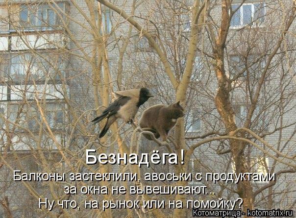 Котоматрица: Безнадёга! Балконы застеклили, авоськи с продуктами за окна не вывешивают...  Ну что, на рынок или на помойку?