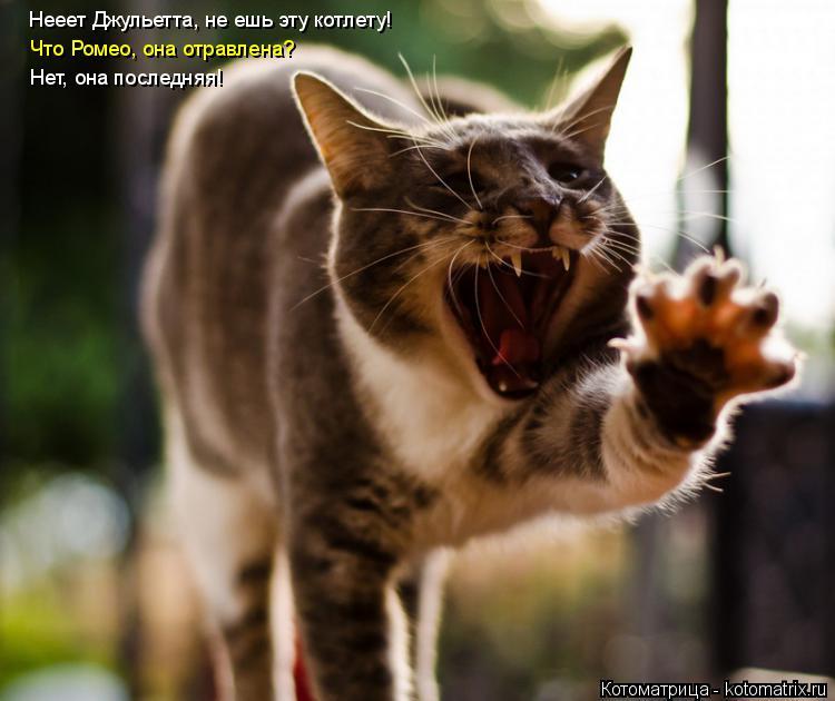 Котоматрица: Нееет Джульетта, не ешь эту котлету! Что Ромео, она отравлена? Нет, она последняя!