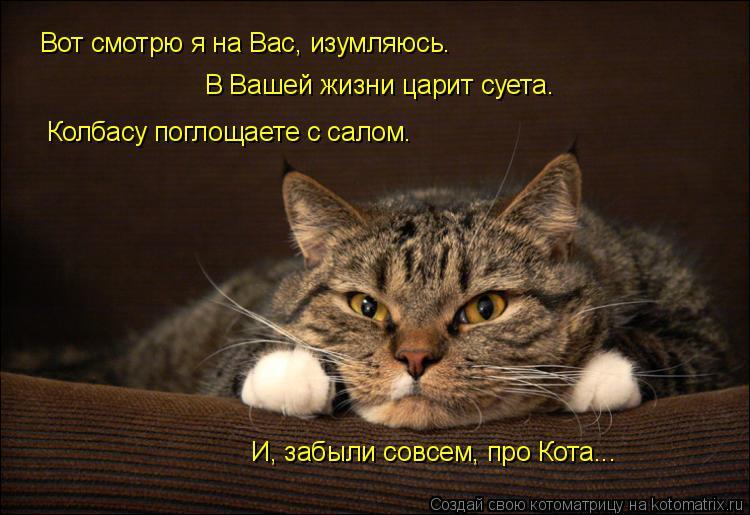 Котоматрица: Вот смотрю я на Вас, изумляюсь. В Вашей жизни царит суета. Колбасу поглощаете с салом. И, забыли совсем, про Кота...