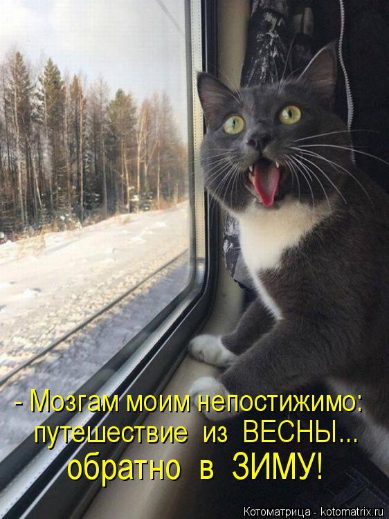 Котоматрица: - Мозгам моим непостижимо: путешествие  из  ВЕСНЫ... обратно  в  ЗИМУ!