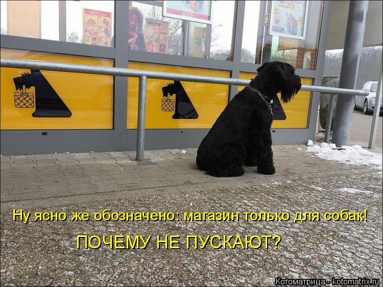 Котоматрица: Ну ясно же обозначено: магазин только для собак! ПОЧЕМУ НЕ ПУСКАЮТ?