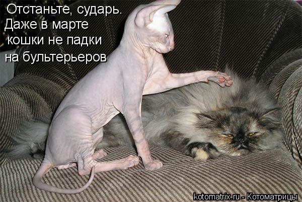 Котоматрица: кошки не падки на бультерьеров Отстаньте, сударь. Даже в марте