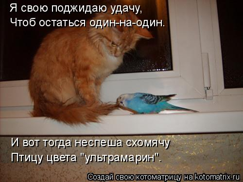 """Котоматрица: Я свою поджидаю удачу, Чтоб остаться один-на-один. И вот тогда неспеша схомячу Птицу цвета """"ультрамарин""""."""