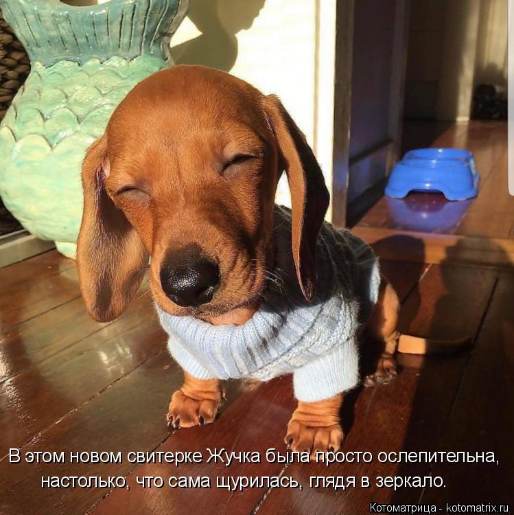 Котоматрица: В этом новом свитерке Жучка была просто ослепительна, настолько, что сама щурилась, глядя в зеркало.