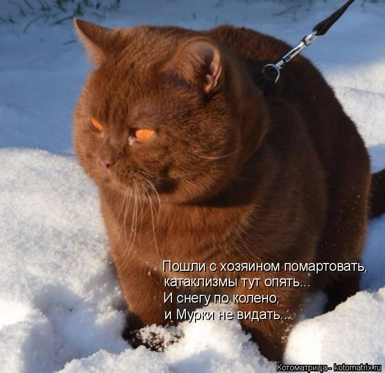 Котоматрица: Пошли с хозяином помартовать,  И снегу по колено, и Мурки не видать... катаклизмы тут опять...